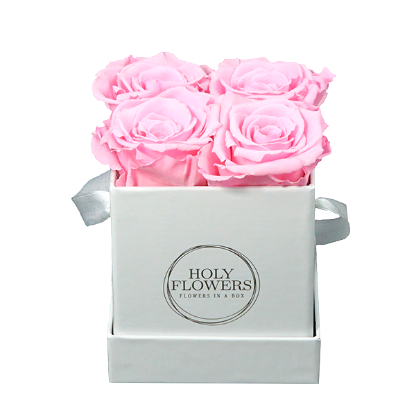 rosa rosen xs rosa rosen in der box blumenboxen holy flowers rosen in der box. Black Bedroom Furniture Sets. Home Design Ideas