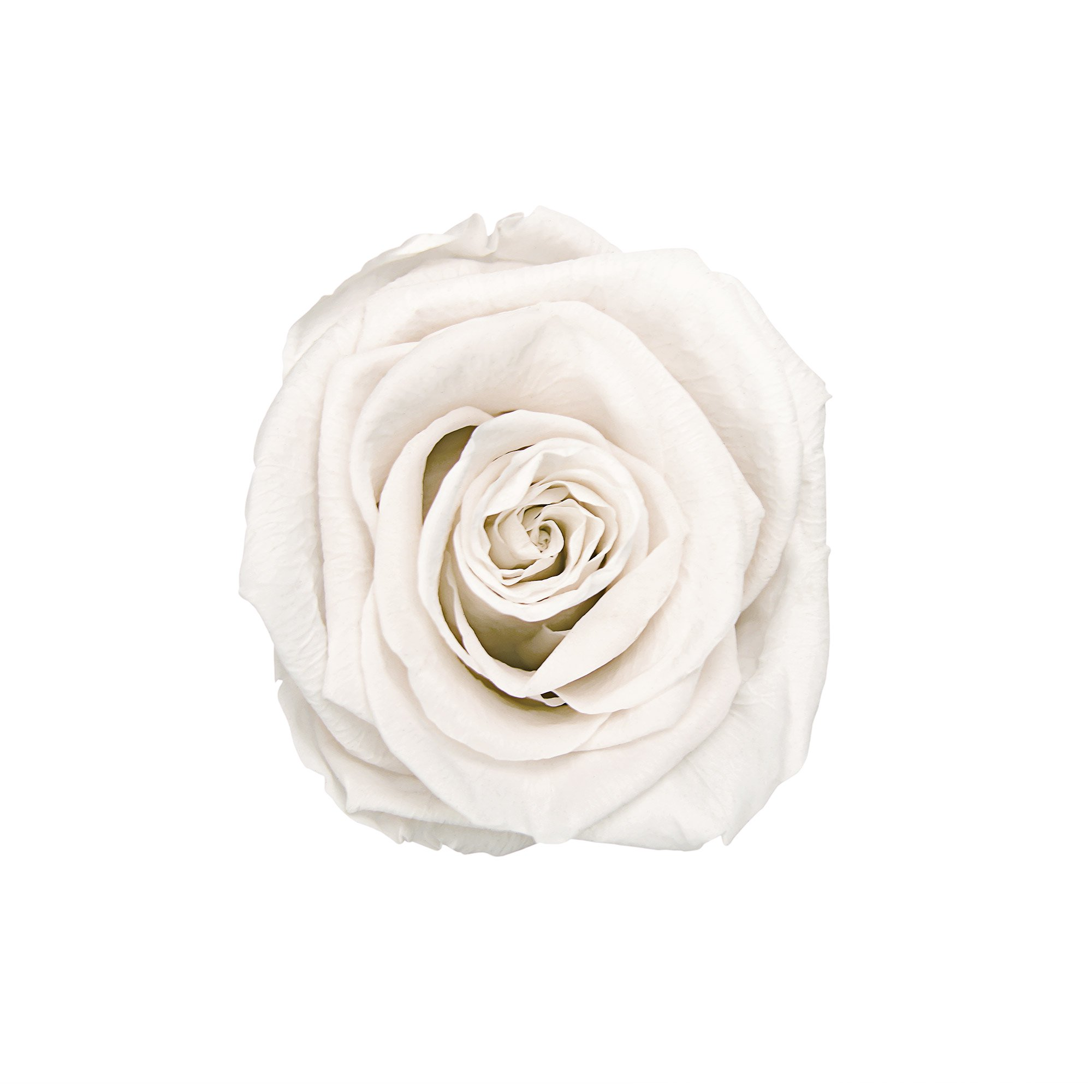 MINI_Round_Whiterose_White